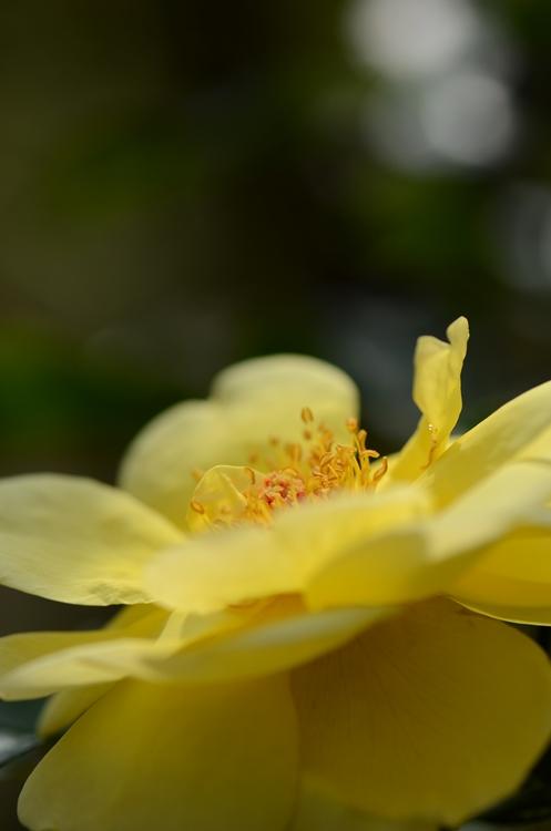 20141011 rose12