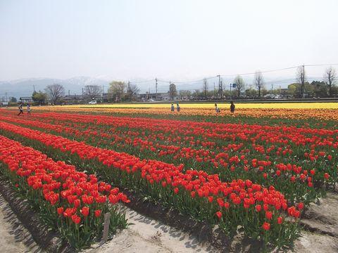 furawa0427-2.jpg