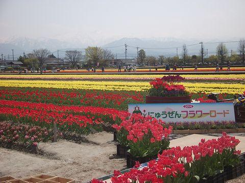 furawa0427-5.jpg