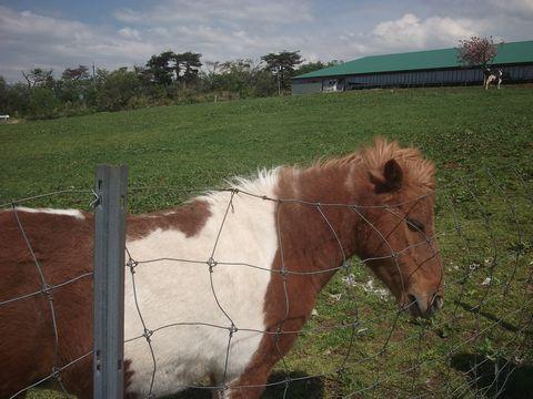 pony0506-1.jpg