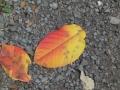 10月1日の秋-1