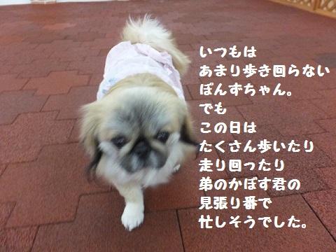 20140302mu24.jpg