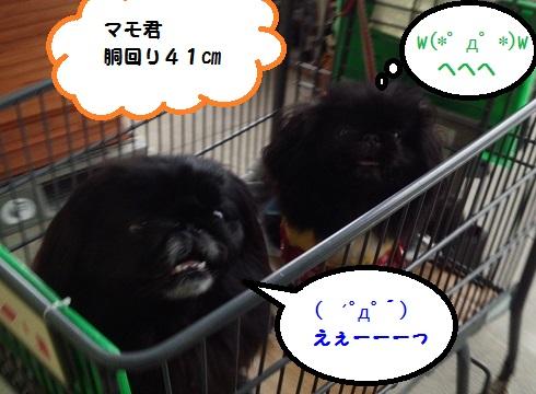 20140321mu6.jpg