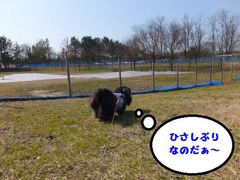 20140324mu2.jpg