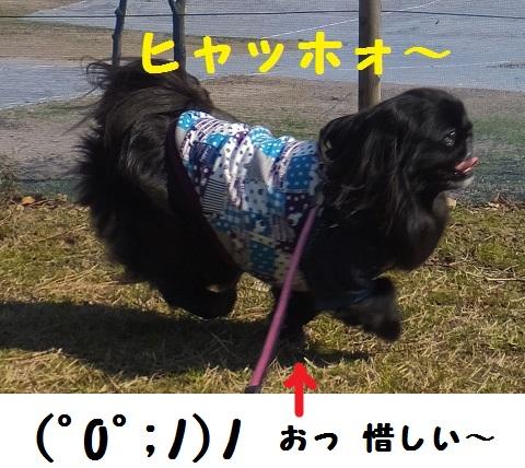 20140324mu6.jpg