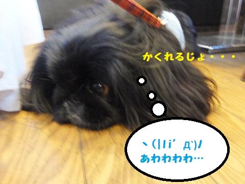 20140510mu19.jpg