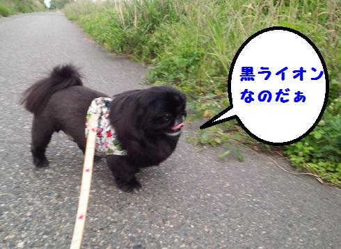 20140514mu5.jpg