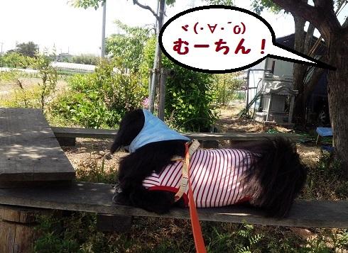 20140519mu1.jpg