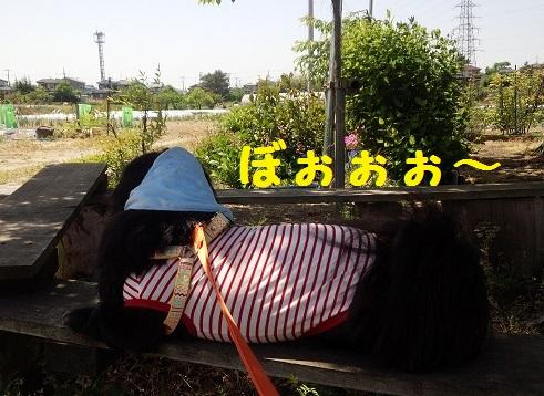 20140519mu4.jpg
