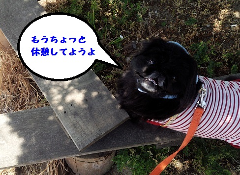 20140519mu7.jpg