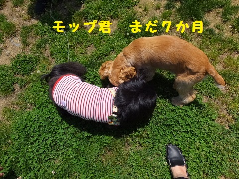 20140531mu12.jpg