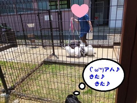 20140531mu13.jpg