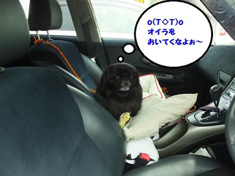 20140618mu5.jpg