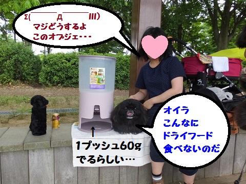 20140622mu12.jpg