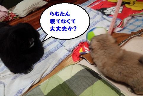 20140711m6.jpg