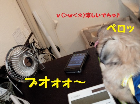 20140712m5.jpg