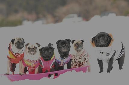 雪の上で・・・