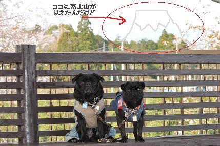 アレっ?富士山が・・・