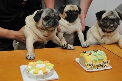 ケーキ~その2・3~