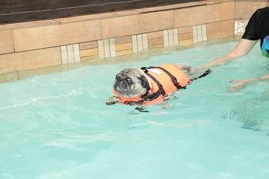 祝、10歳の泳ぎ