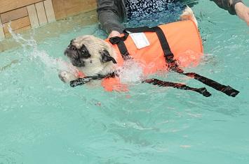 あっ、泳げた・・・