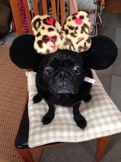 リッキ~マウス