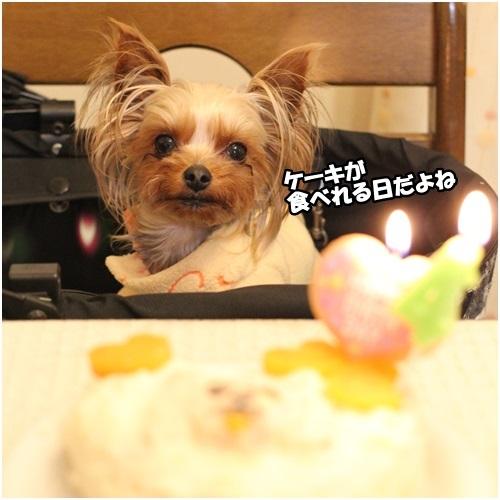 ケーキ食べよ