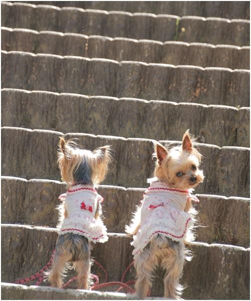 階段クルココ