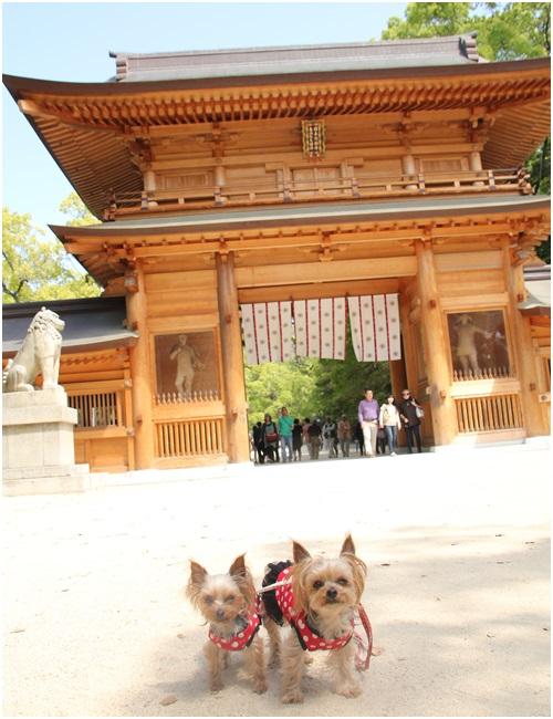 大山ずみ神社