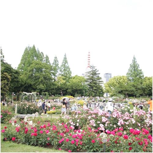うつぼバラ園