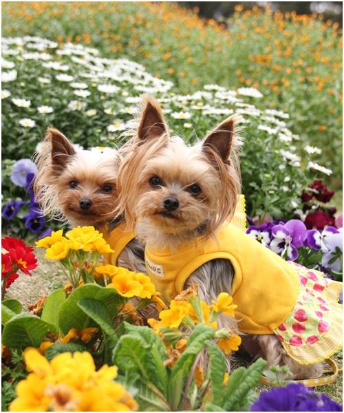 お花とクルココ
