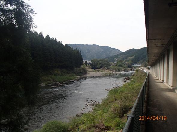 140418-21sakura3 長良川沿い