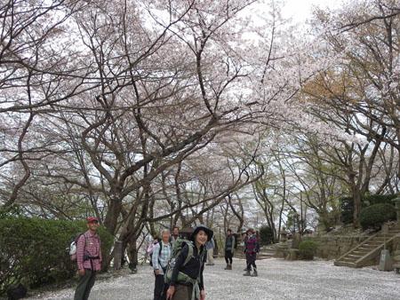 20140410三井寺の桜の下