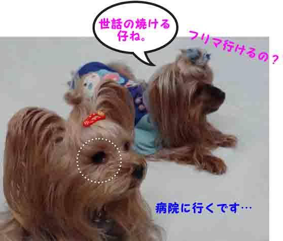 02_20141018023659a30.jpg
