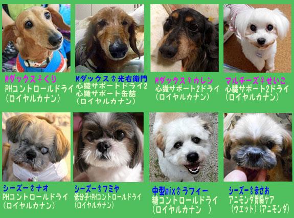 処方食が必要な保護犬たち(8-2014)