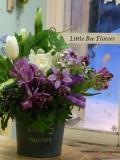 oiwai giftflower