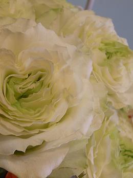 rose haute couture