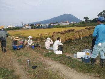 稲刈り2014-1