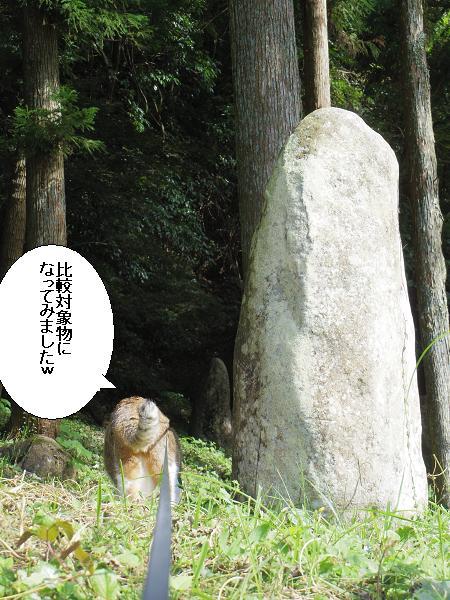 佐田京石4