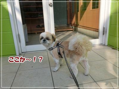 CIMG5788.jpg