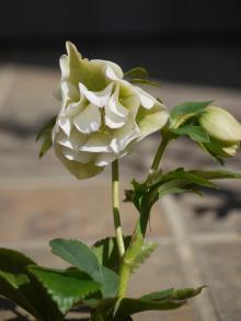 dd White × dd White Pic 014-001