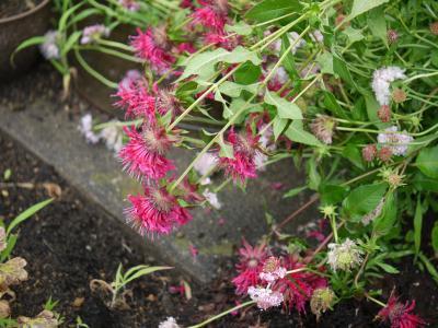雨後の花壇