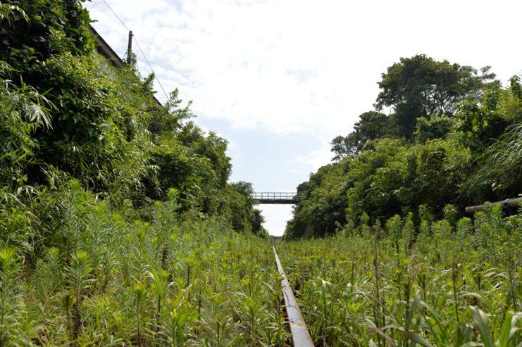 鹿児島 指宿枕崎線の水成川駅からの眺めだがほんとに現役なのかね