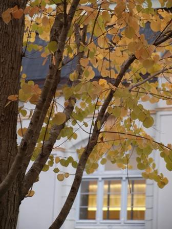 2012.10.30 京都市図書館の庭の黄葉