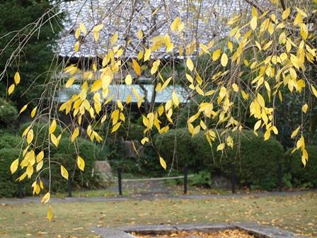 2013.11.21 岡崎神社の境内