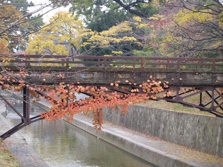 2012.11.29 夙川オアシスロード
