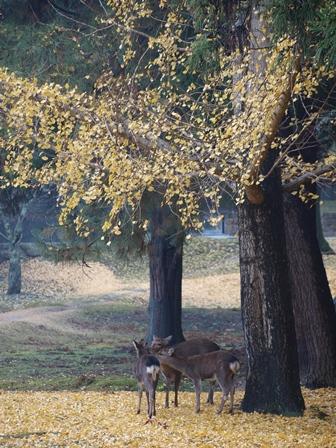 2011.12.8 奈良公園 大仏殿の裏あたり