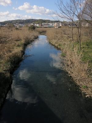 伏見湿地1403