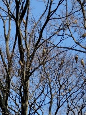 小鳥1404