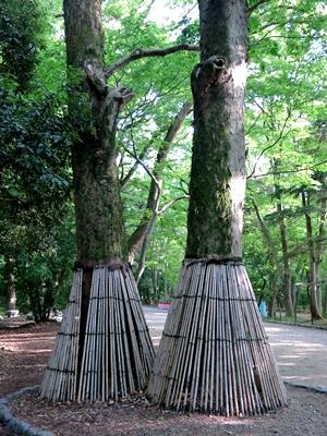 下鴨神社樹木1405